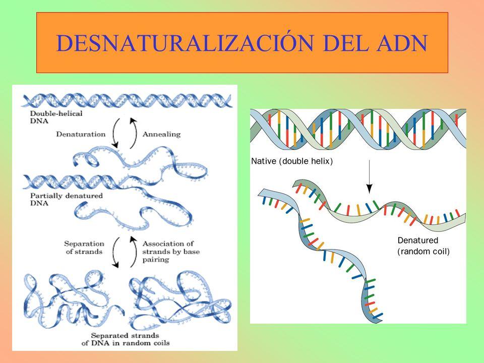 DESNATURALIZACIÓN DEL ADN
