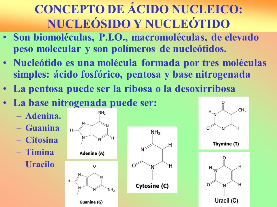 CONCEPTO DE ÁCIDO NUCLEICO: NUCLEÓSIDO Y NUCLEÓTIDO