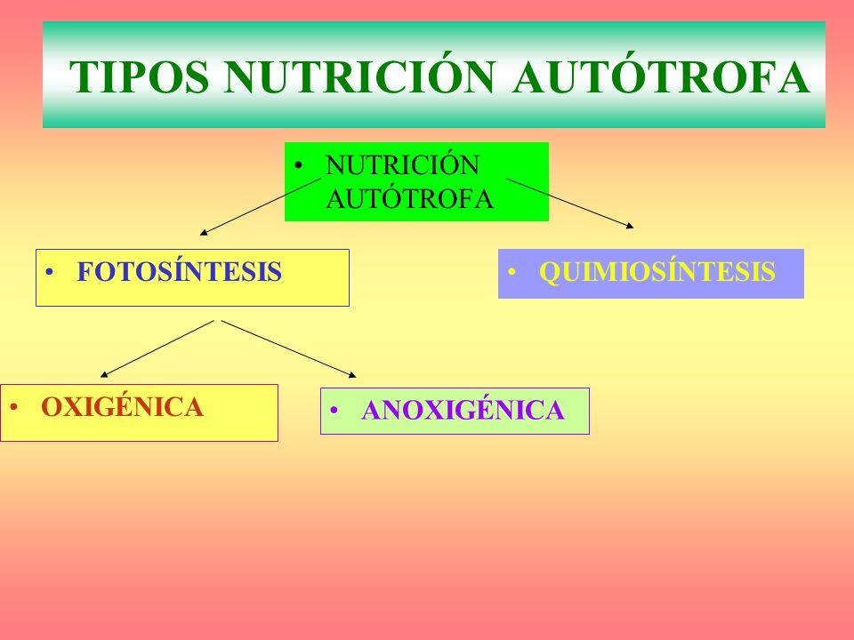 TIPOS NUTRICIÓN AUTÓTROFA