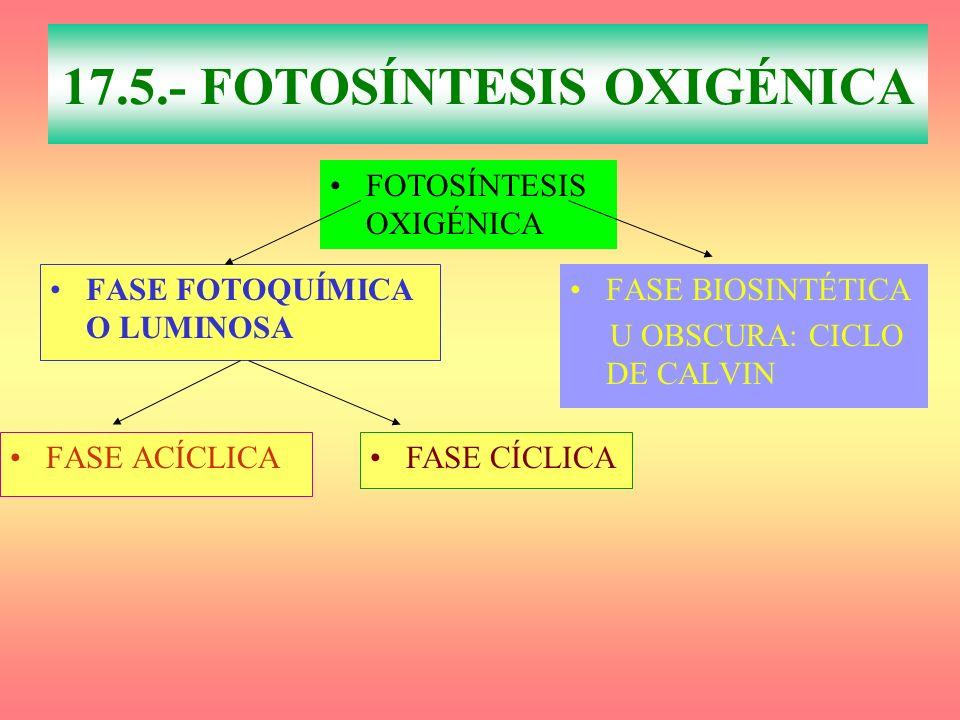 17.5.- FOTOSÍNTESIS OXIGÉNICA