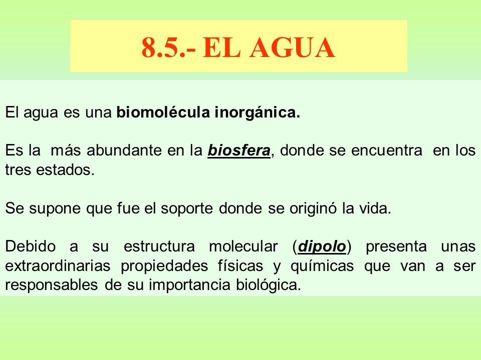 8.5.- EL AGUA El agua es una biomolécula inorgánica.