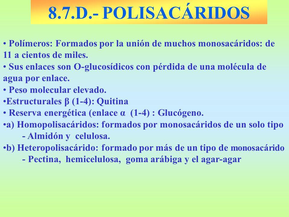 8.7.D.- POLISACÁRIDOS Polímeros: Formados por la unión de muchos monosacáridos: de 11 a cientos de miles.