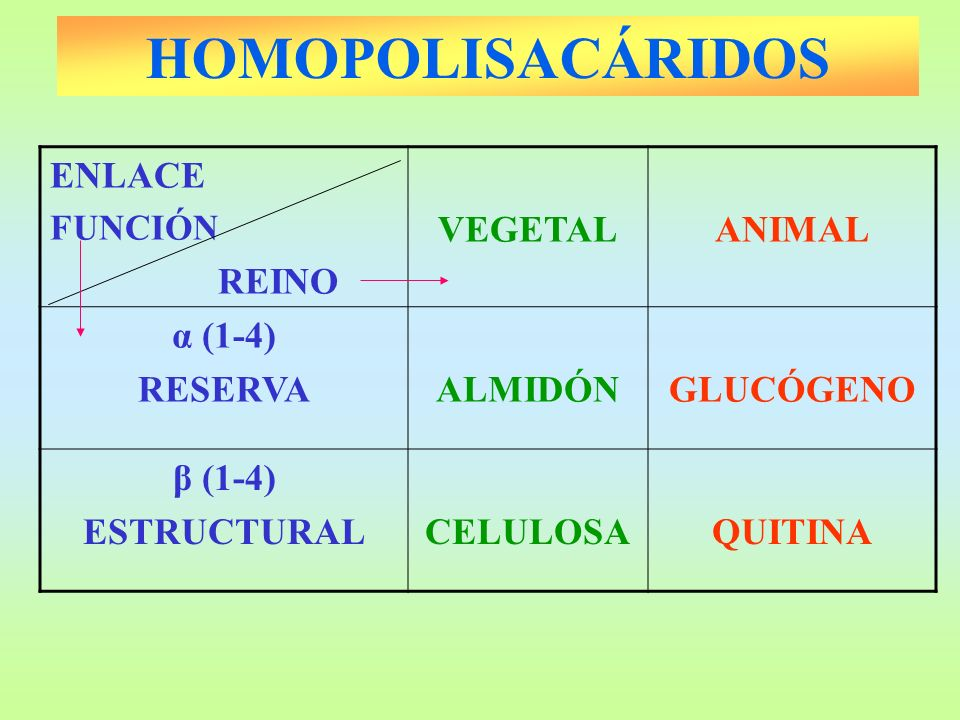 HOMOPOLISACÁRIDOS ENLACE REINO VEGETAL ANIMAL α (1-4) RESERVA ALMIDÓN