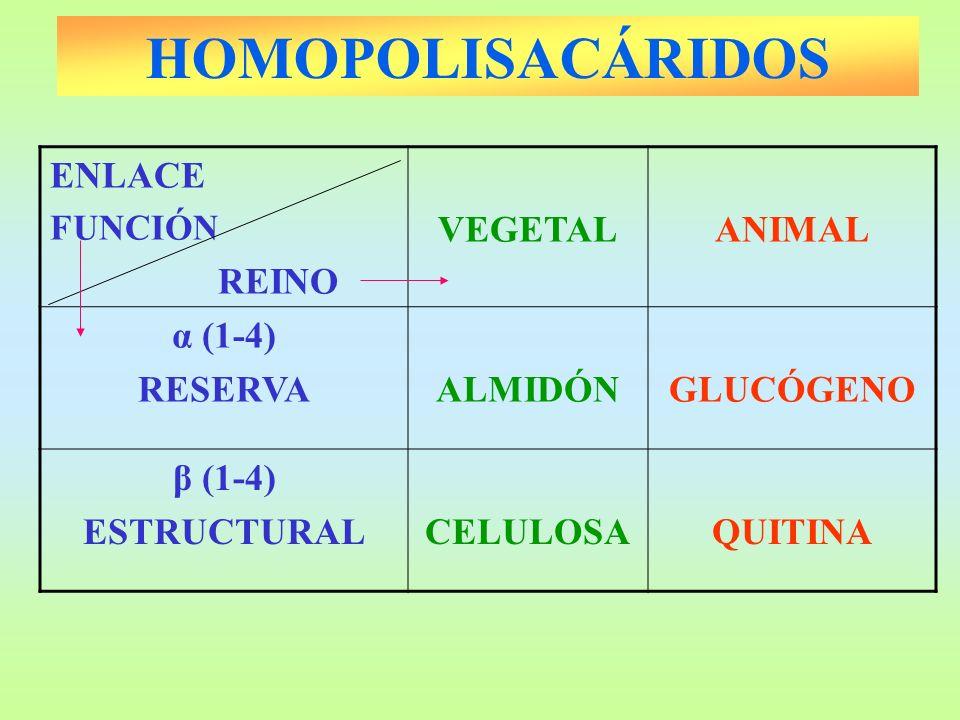 HOMOPOLISACÁRIDOS ENLACE REINO VEGETAL ANIMAL α (1-4) RESERVA ALMIDÓN