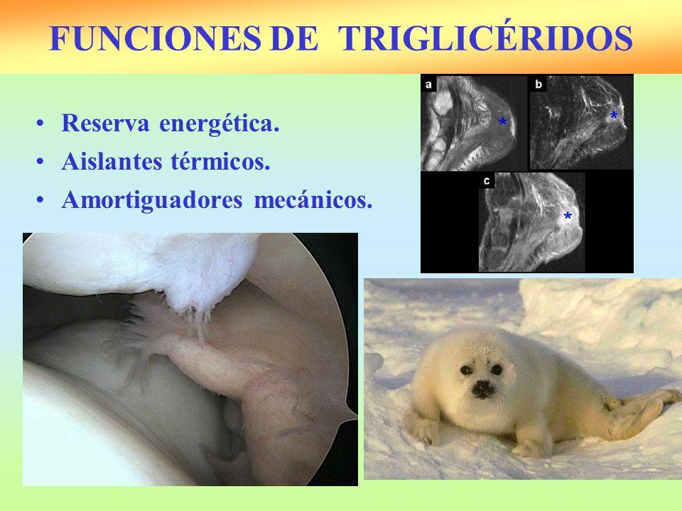 FUNCIONES DE TRIGLICÉRIDOS