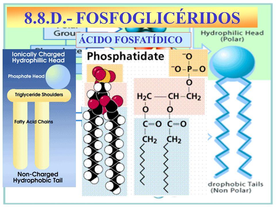 8.8.D.- FOSFOGLICÉRIDOS ÁCIDO FOSFATÍDICO
