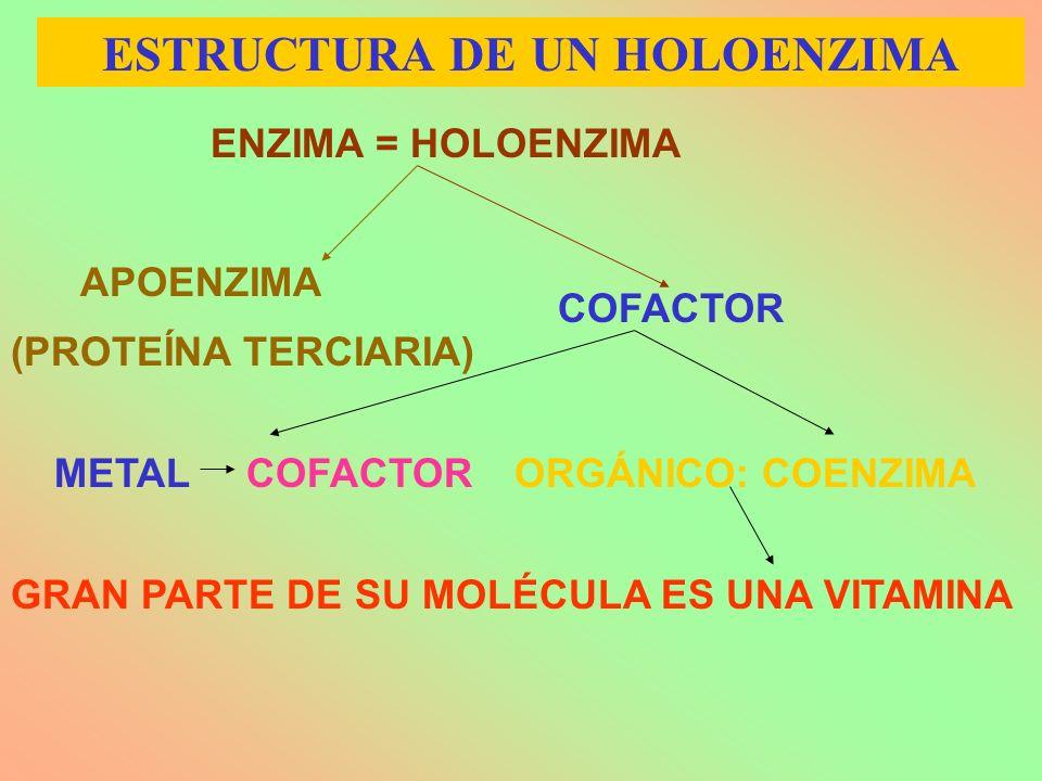 ESTRUCTURA DE UN HOLOENZIMA