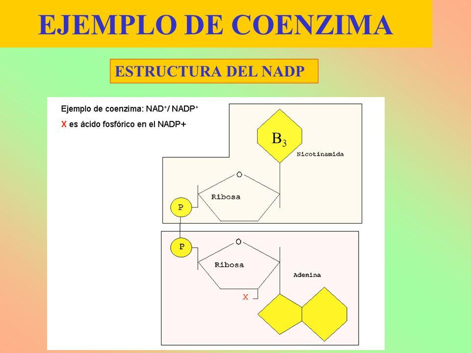 EJEMPLO DE COENZIMA ESTRUCTURA DEL NADP B3