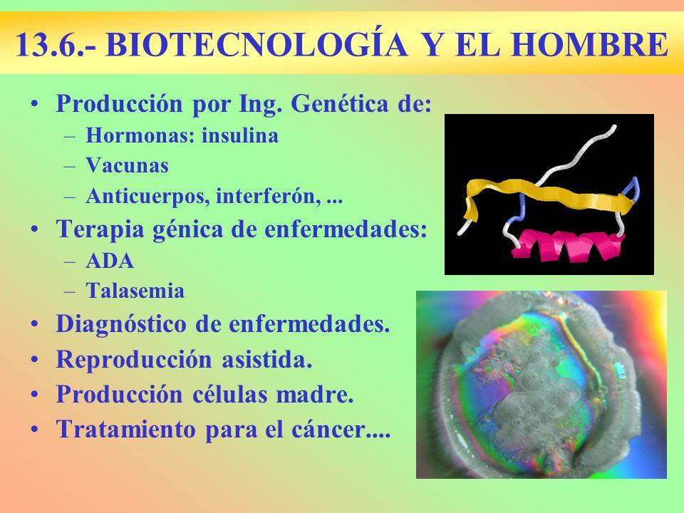 13.6.- BIOTECNOLOGÍA Y EL HOMBRE