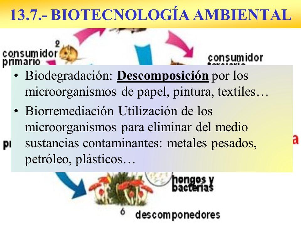 13.7.- BIOTECNOLOGÍA AMBIENTAL