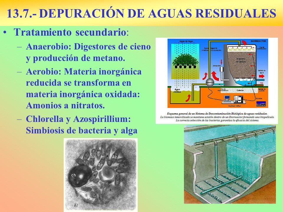 13.7.- DEPURACIÓN DE AGUAS RESIDUALES