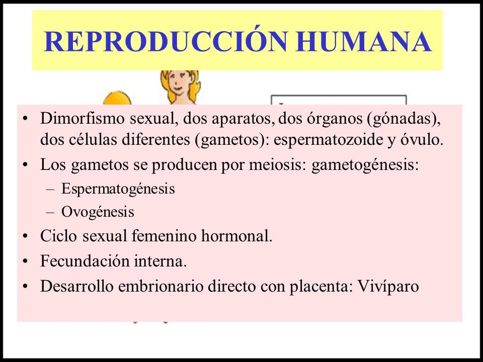 REPRODUCCIÓN HUMANADimorfismo sexual, dos aparatos, dos órganos (gónadas), dos células diferentes (gametos): espermatozoide y óvulo.