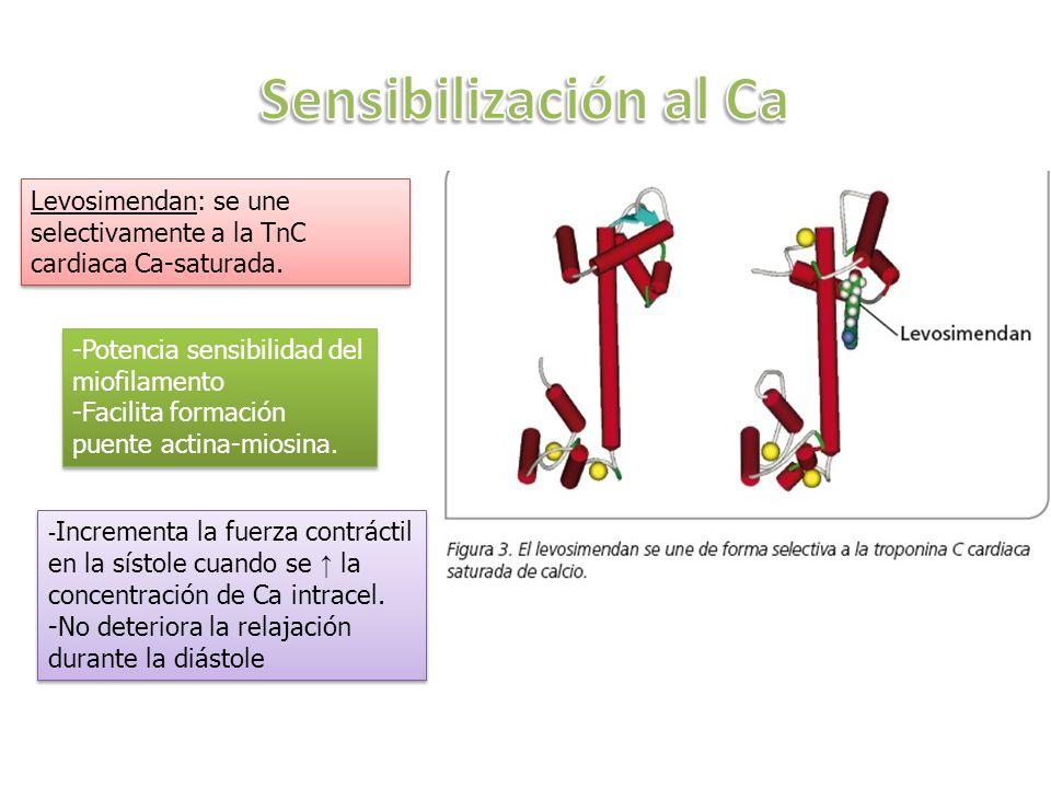 Sensibilización al Ca Levosimendan: se une selectivamente a la TnC cardiaca Ca-saturada. -Potencia sensibilidad del miofilamento.