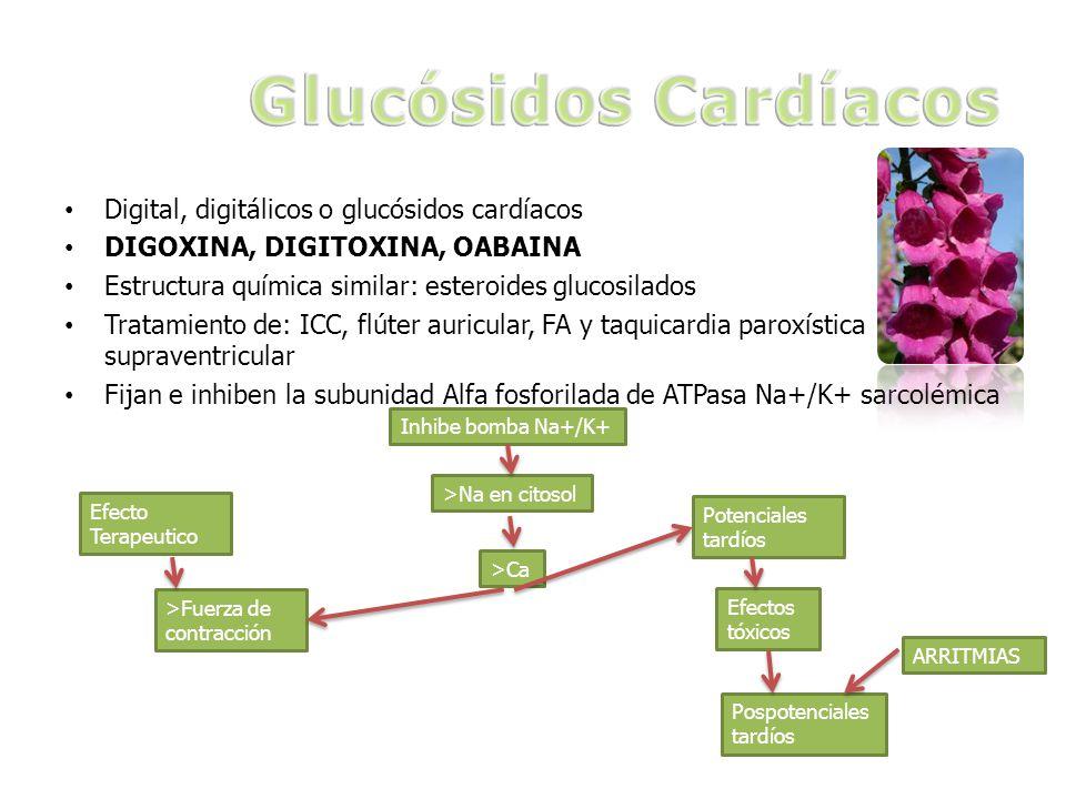 Glucósidos Cardíacos Digital, digitálicos o glucósidos cardíacos