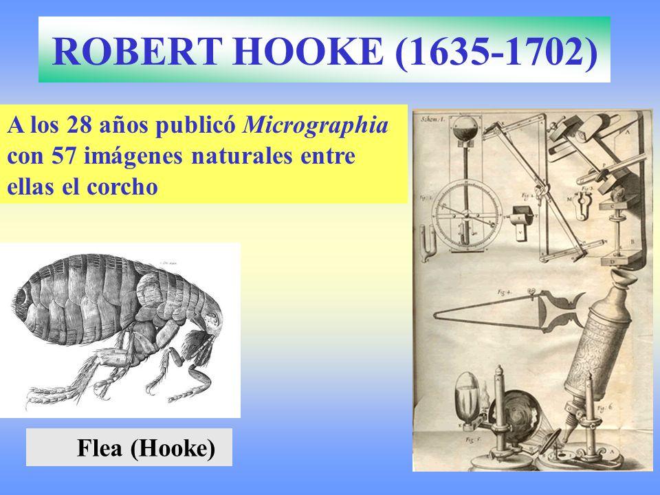 ROBERT HOOKE (1635-1702)A los 28 años publicó Micrographia con 57 imágenes naturales entre ellas el corcho.