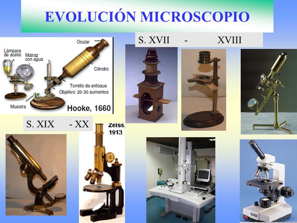 EVOLUCIÓN MICROSCOPIO