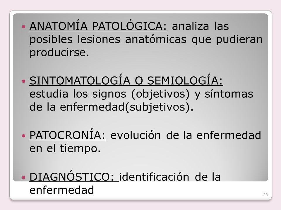 ANATOMÍA PATOLÓGICA: analiza las posibles lesiones anatómicas que pudieran producirse.