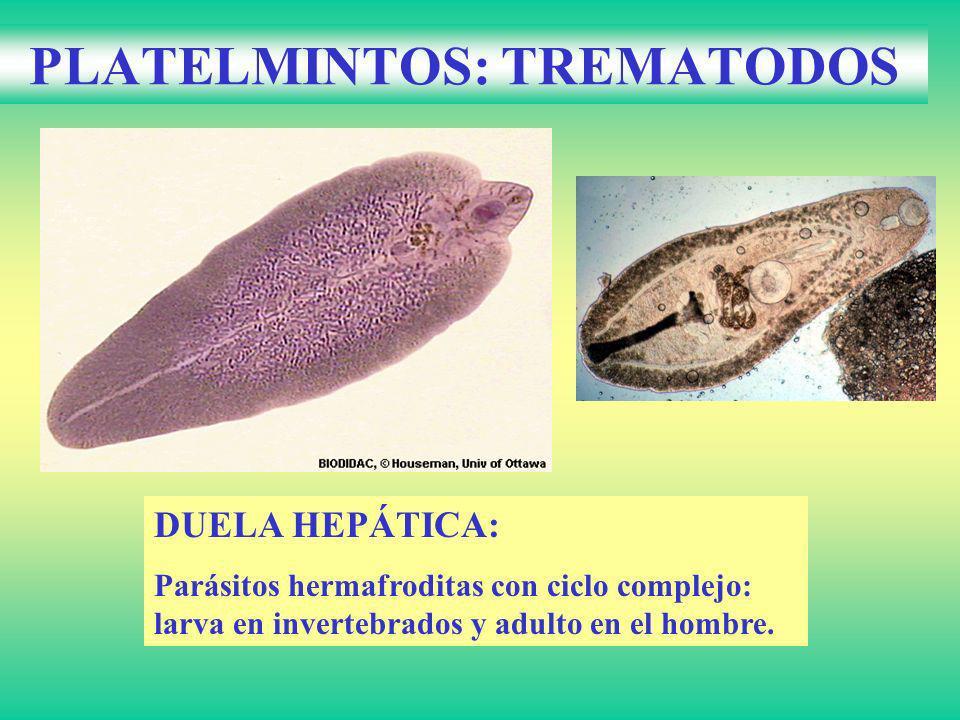 PLATELMINTOS: TREMATODOS