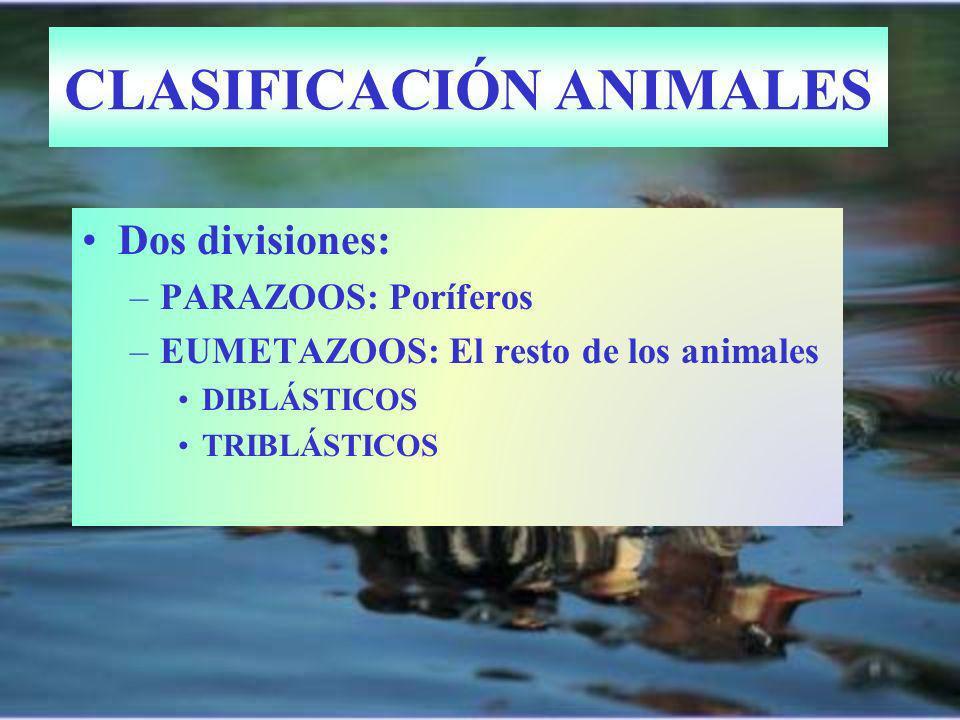 CLASIFICACIÓN ANIMALES