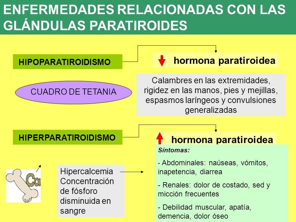ENFERMEDADES RELACIONADAS CON LAS GLÁNDULAS PARATIROIDES