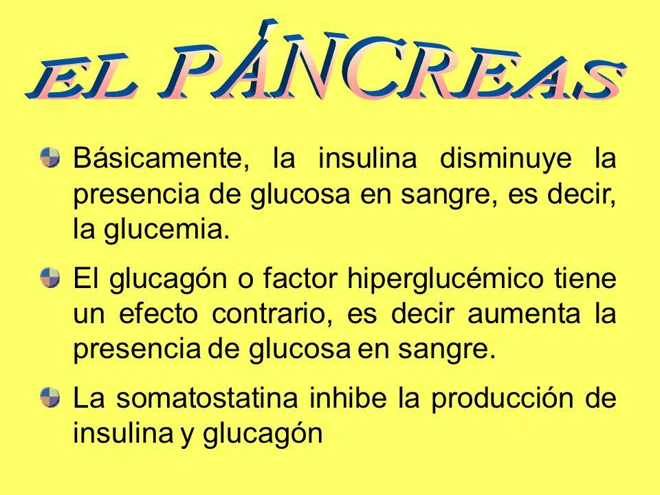 EL PÁNCREAS Básicamente, la insulina disminuye la presencia de glucosa en sangre, es decir, la glucemia.