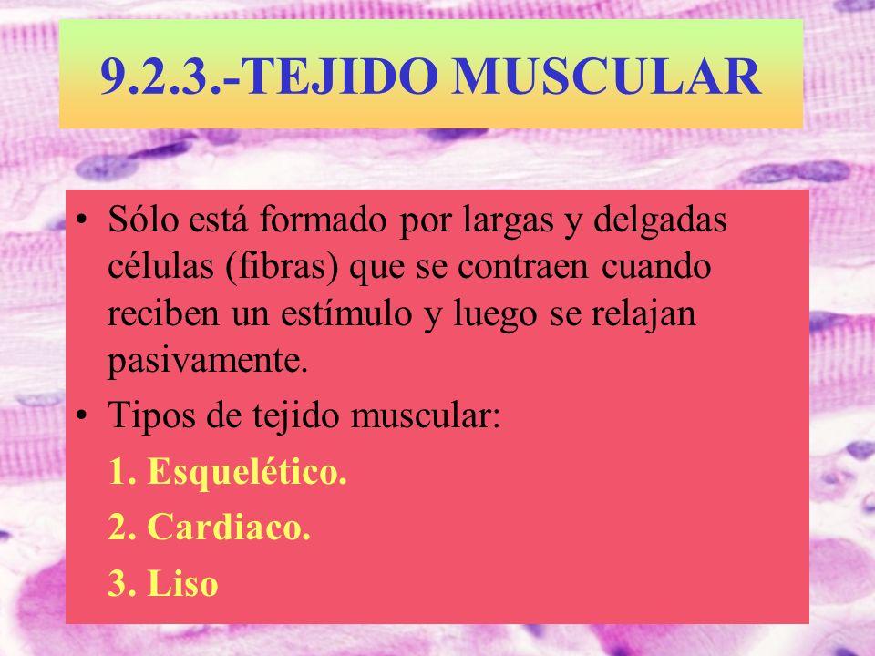9.2.3.-TEJIDO MUSCULAR