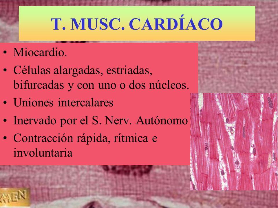 T. MUSC. CARDÍACO Miocardio.