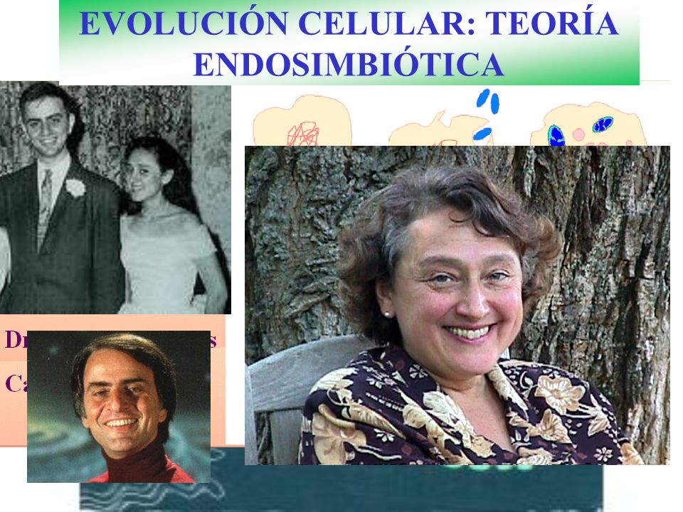 EVOLUCIÓN CELULAR: TEORÍA ENDOSIMBIÓTICA