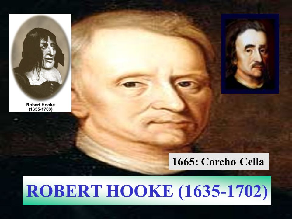 1665: Corcho Cella ROBERT HOOKE ( )
