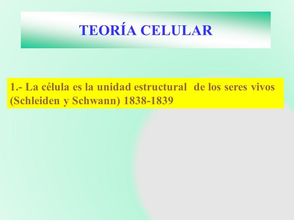 TEORÍA CELULAR 1.- La célula es la unidad estructural de los seres vivos (Schleiden y Schwann) 1838-1839.