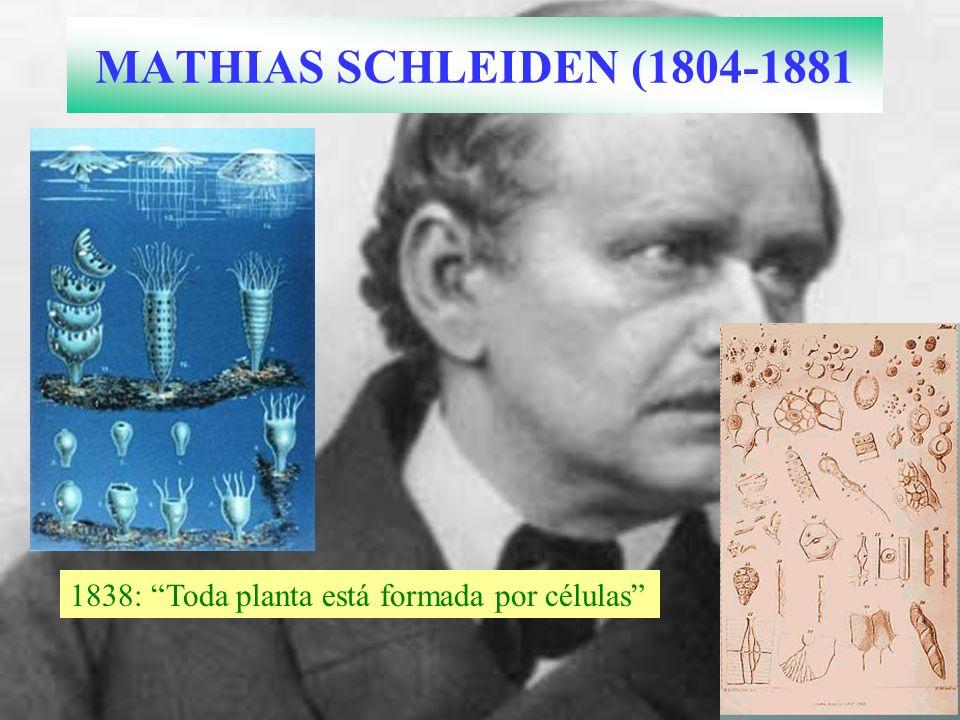 MATHIAS SCHLEIDEN (1804-1881 1838: Toda planta está formada por células