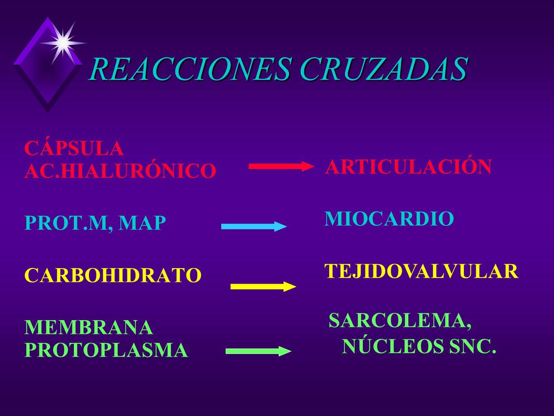 REACCIONES CRUZADAS CÁPSULA AC.HIALURÓNICO ARTICULACIÓN PROT.M, MAP
