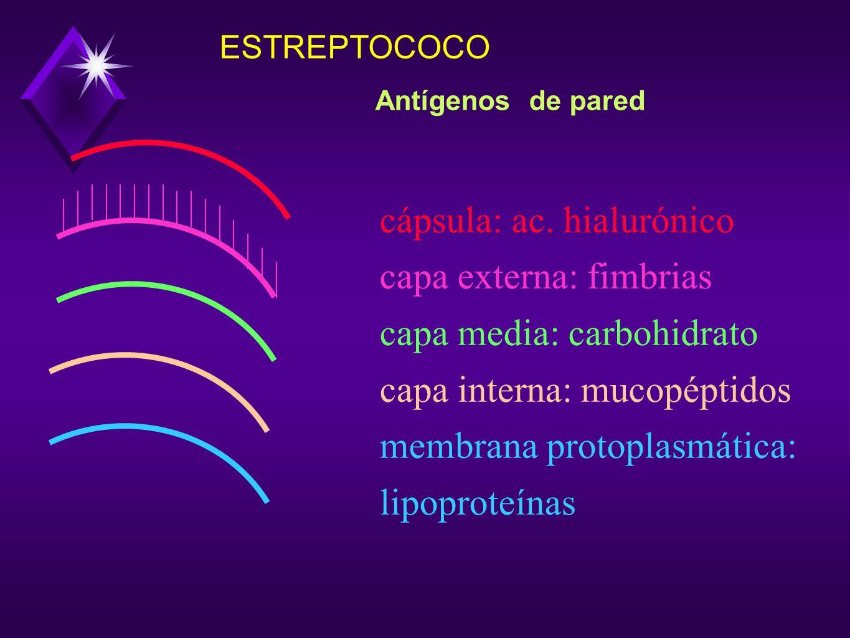 cápsula: ac. hialurónico capa externa: fimbrias
