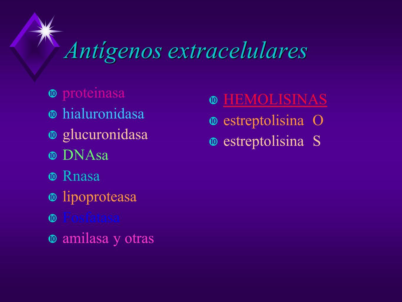 Antígenos extracelulares