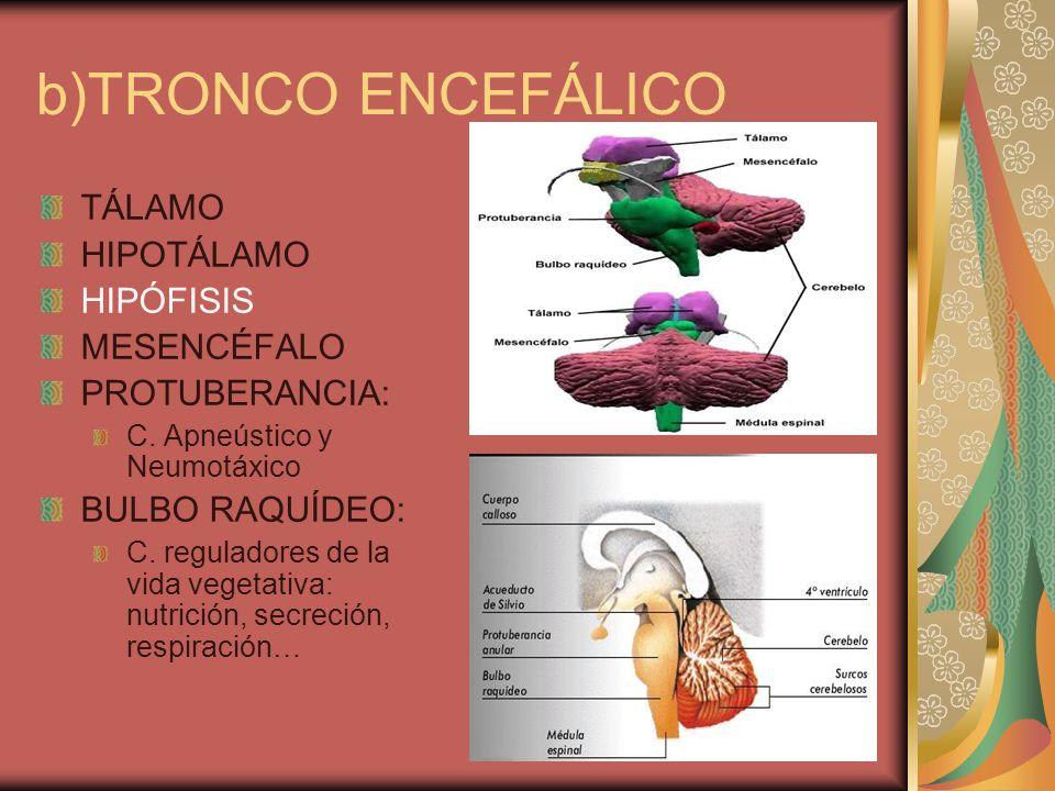 b)TRONCO ENCEFÁLICO TÁLAMO HIPOTÁLAMO HIPÓFISIS MESENCÉFALO