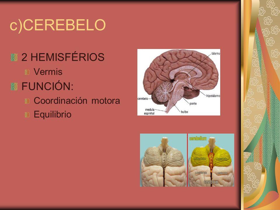 c)CEREBELO 2 HEMISFÉRIOS FUNCIÓN: Vermis Coordinación motora