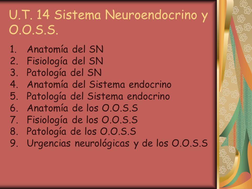 U.T. 14 Sistema Neuroendocrino y O.O.S.S.