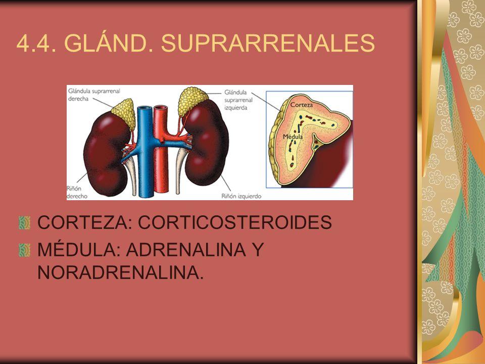 4.4. GLÁND. SUPRARRENALES CORTEZA: CORTICOSTEROIDES
