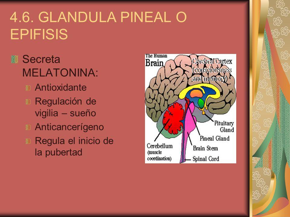 4.6. GLANDULA PINEAL O EPIFISIS