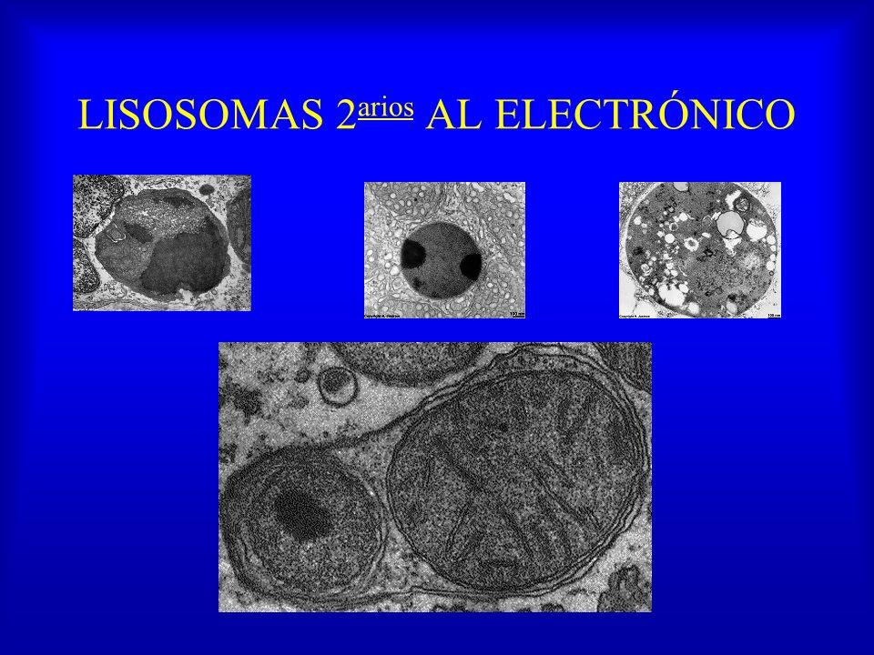 LISOSOMAS 2arios AL ELECTRÓNICO