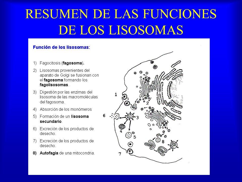 RESUMEN DE LAS FUNCIONES DE LOS LISOSOMAS