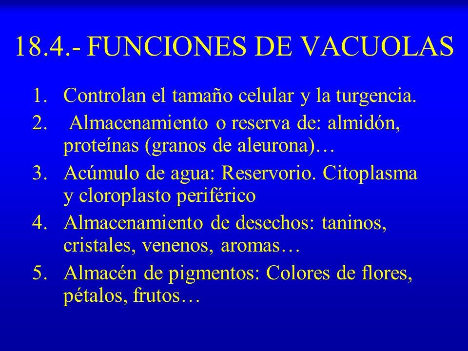 18.4.- FUNCIONES DE VACUOLAS