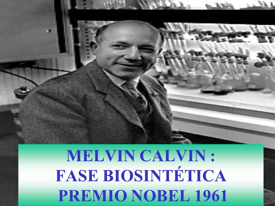 MELVIN CALVIN : FASE BIOSINTÉTICA PREMIO NOBEL 1961