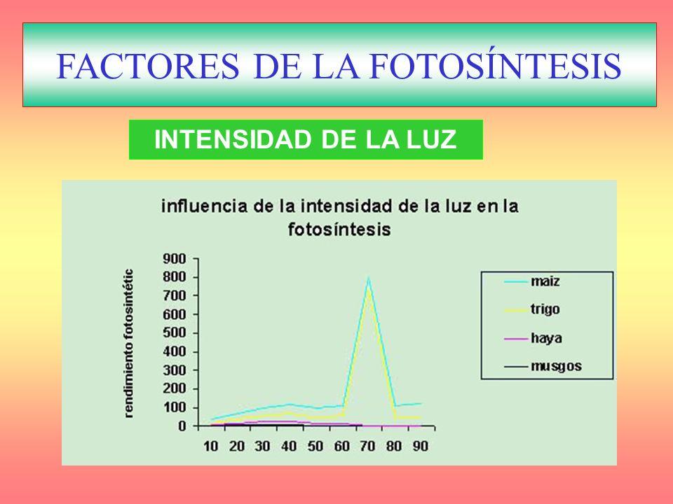 FACTORES REGULADORES DE LA FOTOSÍNTESIS