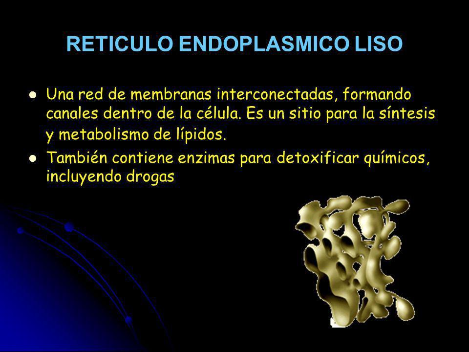 RETICULO ENDOPLASMICO LISO