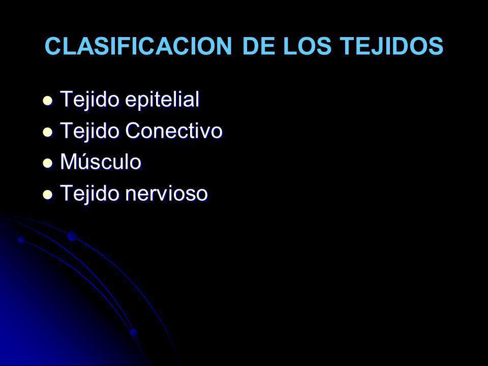 CLASIFICACION DE LOS TEJIDOS