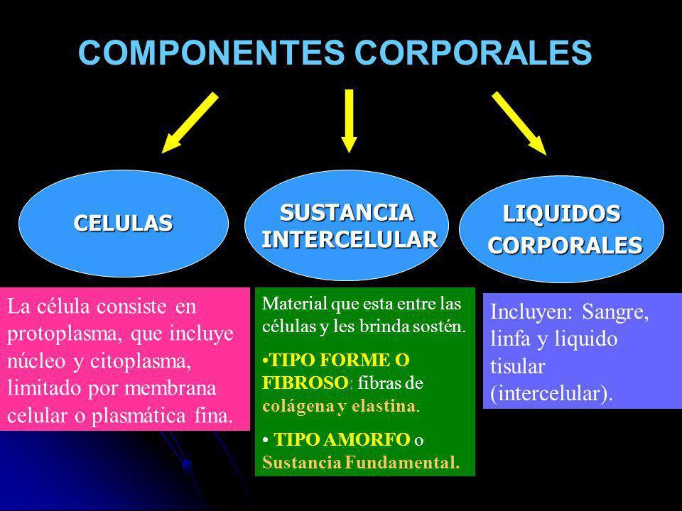 COMPONENTES CORPORALES