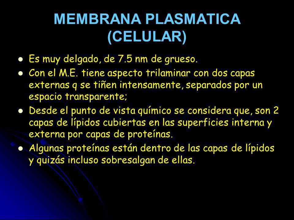 MEMBRANA PLASMATICA (CELULAR)