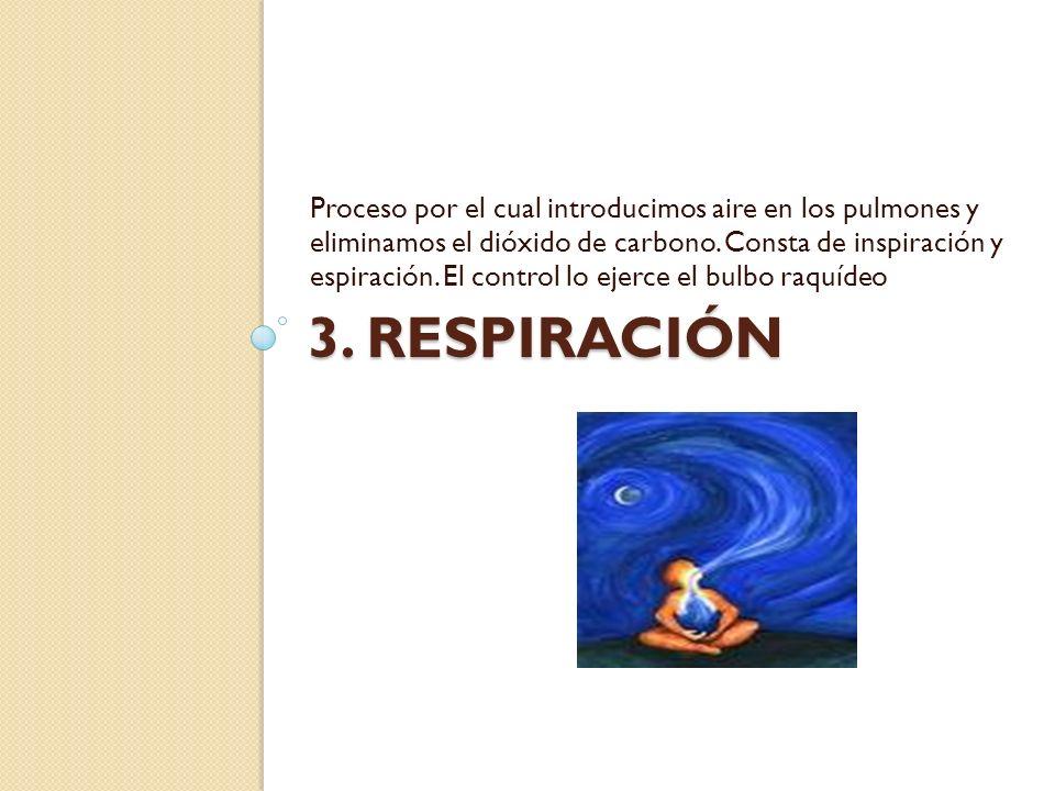 Proceso por el cual introducimos aire en los pulmones y eliminamos el dióxido de carbono. Consta de inspiración y espiración. El control lo ejerce el bulbo raquídeo