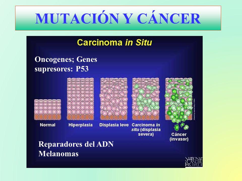 MUTACIÓN Y CÁNCER Oncogenes; Genes supresores: P53 Reparadores del ADN